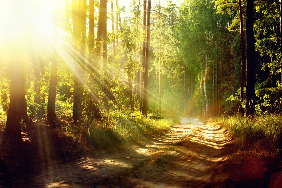 Nature Healing For Depression Symptoms, Anxiety Attacks